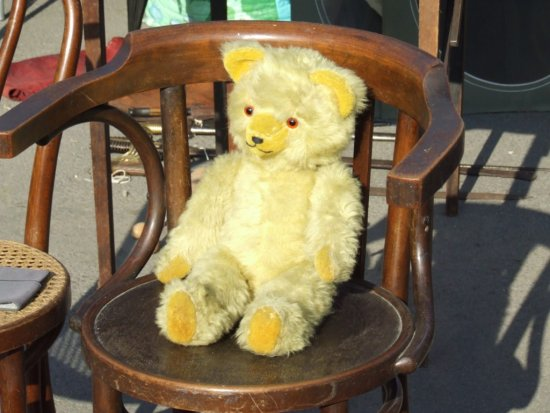 Nuestro amigo oso esperando un trabajo